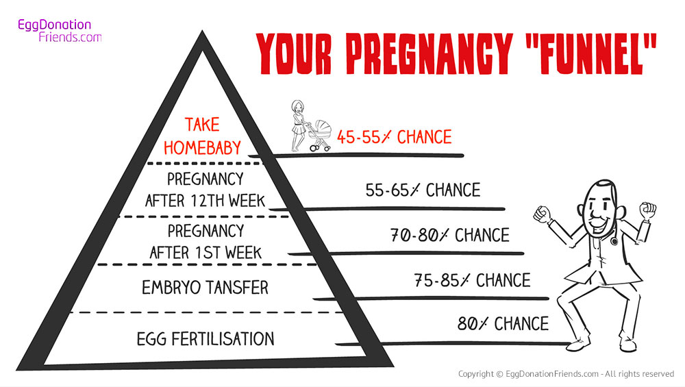 IVF with donor eggs success rates - Pregnancy Funnel