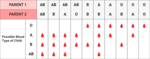 Genetische Vererbung der Blutgruppe – IVF mit Eizellspende